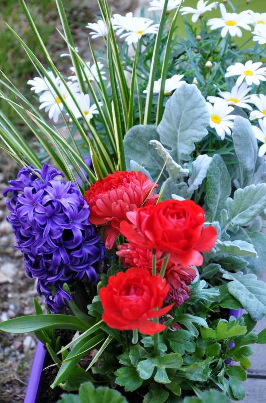 fleurs,jacinthe,reconcule