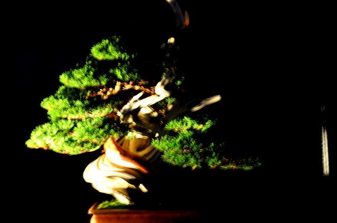 bonzai,journees d'octobre mulhouse,exposition bonsai mulhouse